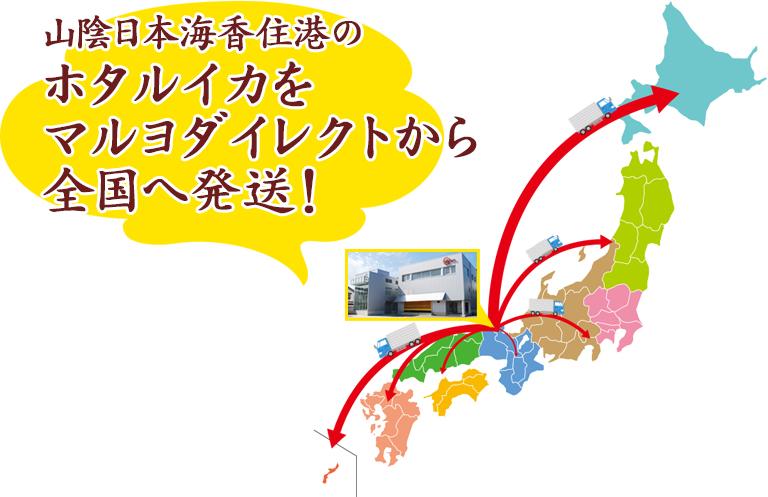 山陰日本海香住港のホタルイカをマルヨダイレクトから全国へ発送!