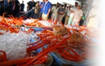 セリにて、より鮮度の高い蟹を買い付け。